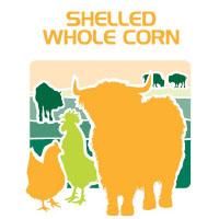 shelled whole corn feed bag icon